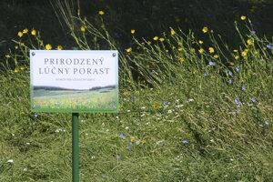 Niektoré časti parku Anička sa nekosia, vznikli tam prirodzené lúčne porasty.