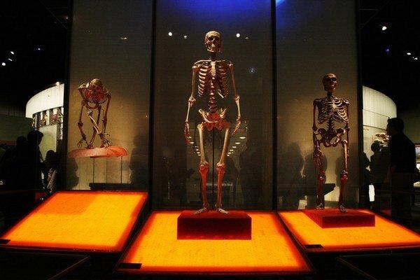 Neandertálci (vpravo) a moderní ľudia mali k sebe blízko.