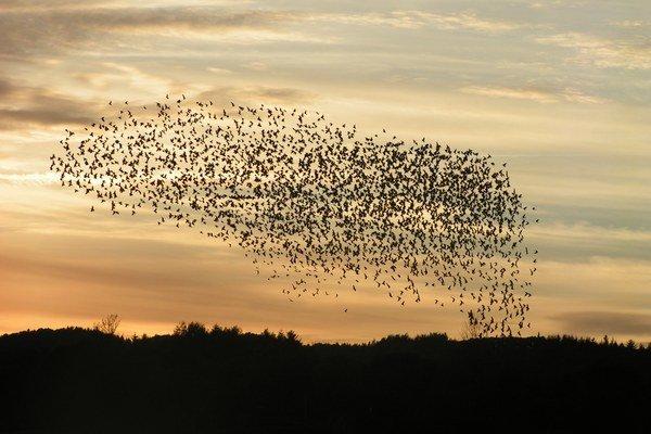 Migrácia vtákov.