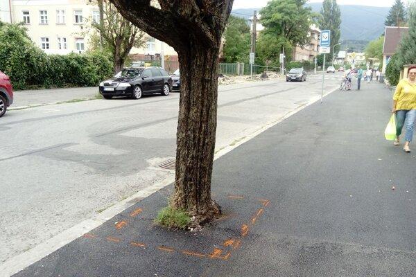 Takto stavbári zaliali asfaltom chodník, aj spolu so stromami.