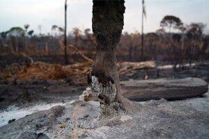 Zničený les v amazonskej oblasti Alvorada.