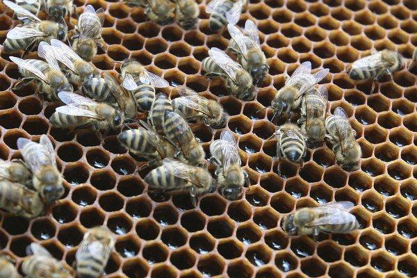 Včiel v Európe ubúda.