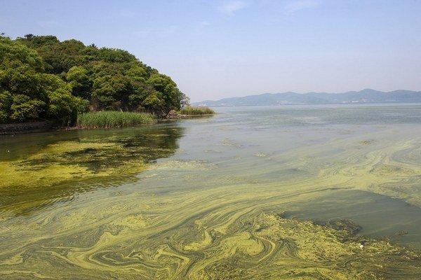 Sinice sú kľúčové pre morské ekosystémy.