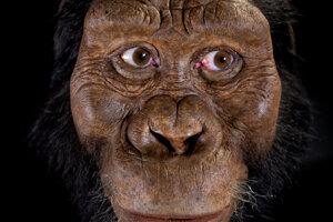 Rekonštrukcia tváre jedinca, ktorého lebku objavili v Etiópii. Na rekonštrukcii pracoval John Gurche za pomoci Susan a Geaogra Kleinovcov.