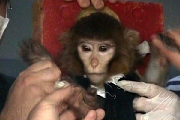 Tmavá opica možno letela do vesmíru.