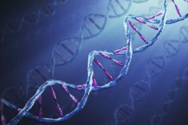 DNA sa nachádza v jadrách buniek.