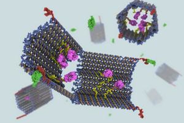 DNA nanoroboty nesú protilátky.