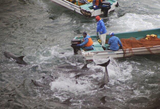 Lov delfínov pri Taidži. Archívna snímka z januára 2014.