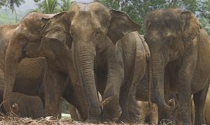 slony.jpg