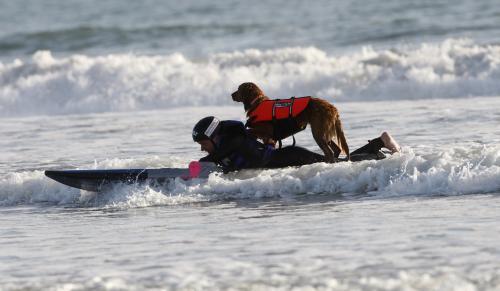 vozickar-surfer_sitaap.jpg