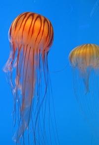 meduza2.jpg