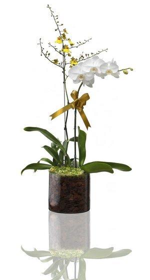orchidea_sxc_res.jpg