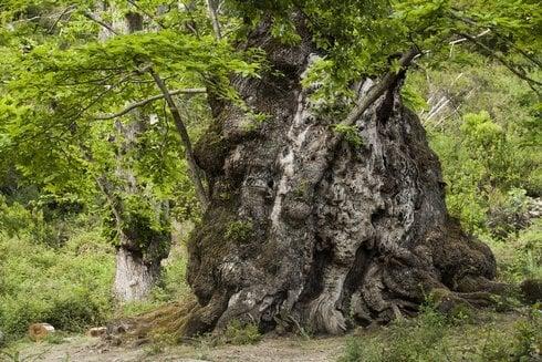 3.fra_the-chestnut_tree-2-nicolas-van-in_r2490_res.jpg