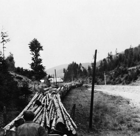 preprava-dreva-na-lesnej-zeleznici_450_r1991.jpg