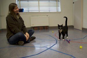 Mačka, ktorá má bezpečnú väzbu s človekom.