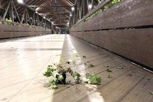 Väčšina kvetov skončila v Orave.