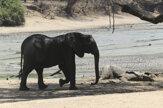 Sucho ničí aj divokú prírodu. V Zimbabwe uhynulo viac ako sto slonov