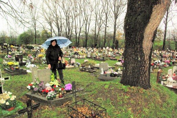 Veľký orech poškodzuje hrob detí Anny Cígerovej.