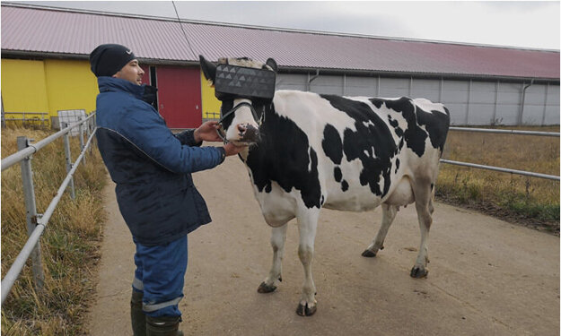Pobyt na virtuálnej lúke vraj kravám robil dobre.
