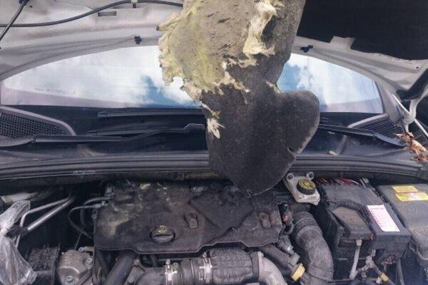 """Aj takto sa môže kuna """"vyšantiť"""" v motorovej časti vášho auta."""
