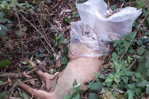 Dve uhynuté prasatá ležali neďaleko rieky Kysuca.