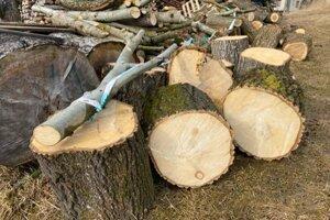 Časť stromov, ktoré boli vyrúbané.