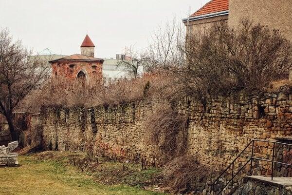 Hradobný múr poškodzujú náletové dreviny.