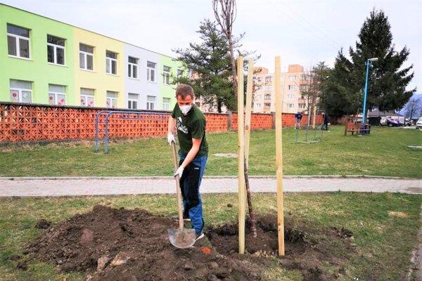 Výsadba stromov v Turanoch.