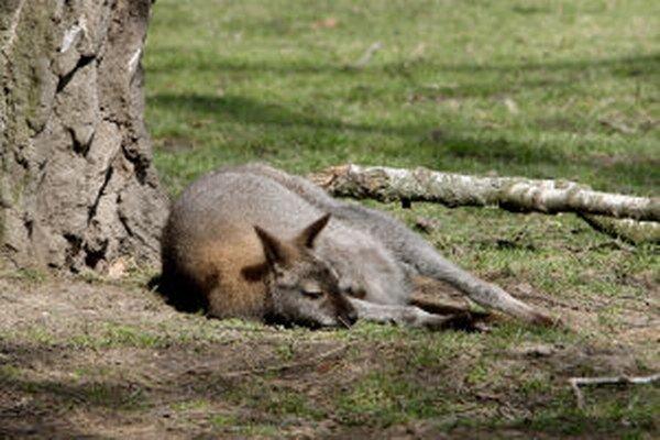 Oddych pod stromom.