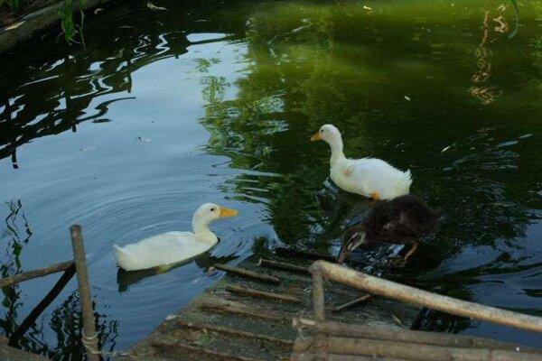 Park zvierat v Stropkove.