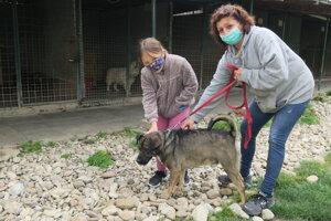 V útulku v Piešťanoch sú desiatky psov.