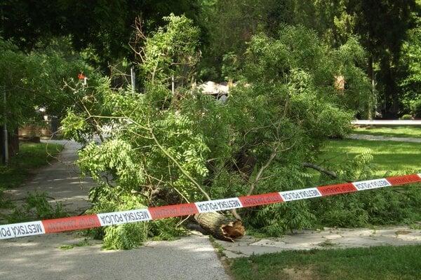 Tento kus stromu zasiahol ženu.