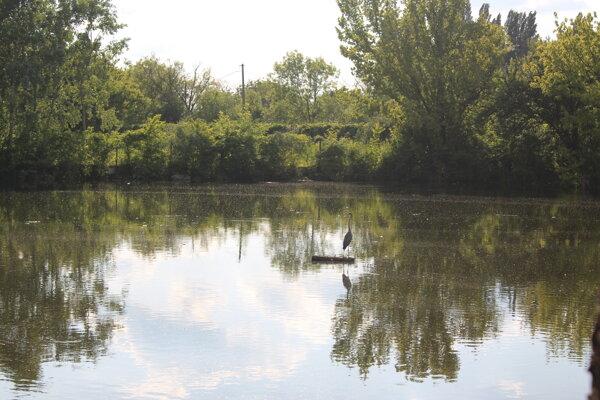 Rybník v Kamennom mlyne vedľa kúpaliska.