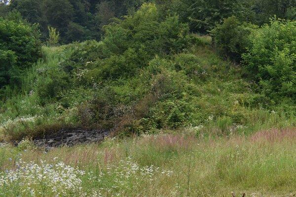 Pozemok, kde sa má postarať dôchodca o odpratanie odpadu. V čase našej návštevy pred týždňom sme tu našli toto zhorenisko.