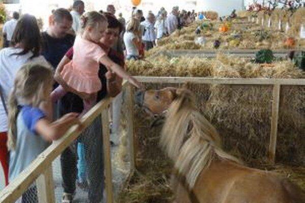 Mini koník priťahoval na seba pozornosť.