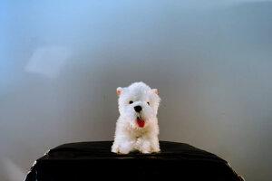 Záber z filmu Stelly Debreovej.