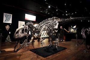 Kostra pravekého allosaura v aukčnom dome Drouot v Paríži.