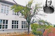 Najdostupnejšia je Fándlyho jabloň v areáli základnej školy v Naháči.