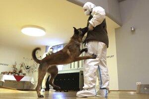Belgický ovčiak rakúskej armády, ktorý je vycvičený na detekciu choroby Covid-19.