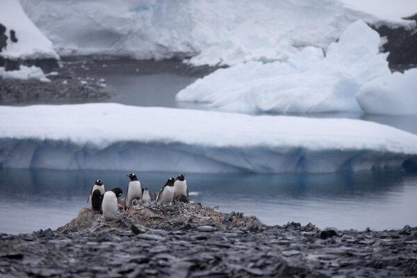 Tučniaky bieloškvrnové stoja na skale neďaleko čilskej stanice Bernardo O'Higgins v Antarktíde.