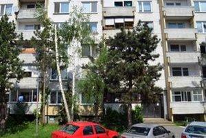 Dvojkmennej breze a borovici na Novomeského ulici chýbajú vrcholy. Stromy prišli aj o bočné konáre.