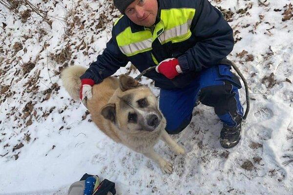 Ročný psík Riko rasy akita inu sa šťastne vrátil domov. Mal šťastie, že ho v lese neroztrhala svorka vlkov.