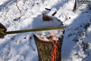 Neznámy páchateľ spílil stromy v Zemplínskej Teplici a Úbreži.