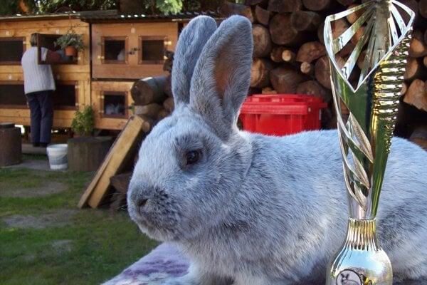 Sestra samca, ktorého volajú Junior, vyhrala súťaž na Krupinsko-hontianskej výstave.