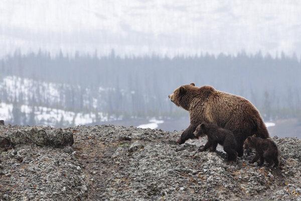 Medvede videli aj pri Hranovnici.