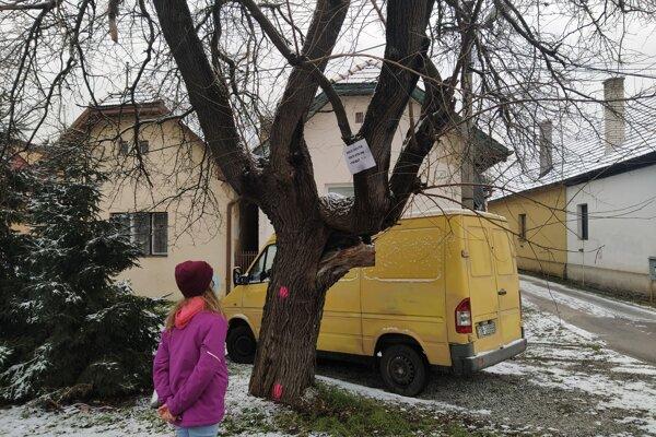 """""""Prečo chcete tento strom vyrúbať?"""""""