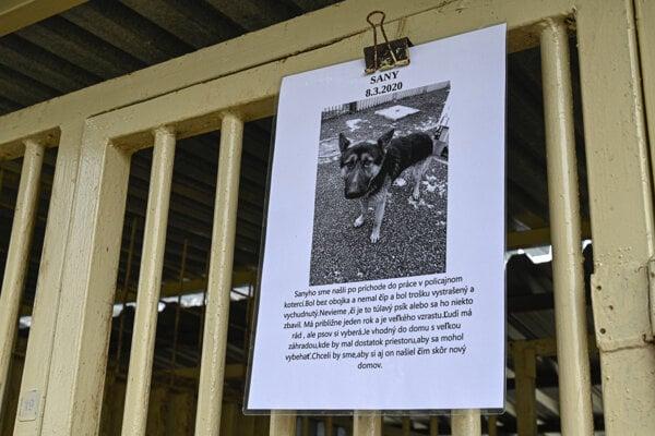 Ceduľa informuje o psíkovi menom Sany, ktorý čaká na nového majiteľa v klietke v Mestskom útulku Poprad.