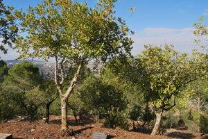 Záhrada Spravodlivých je vysadená stromami záchrancov Židov
