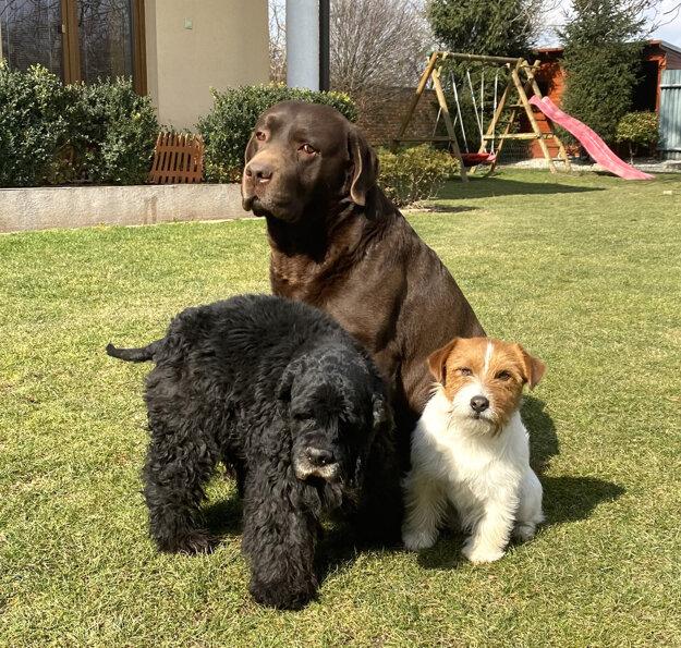 Chrenkovci majú troch psov.