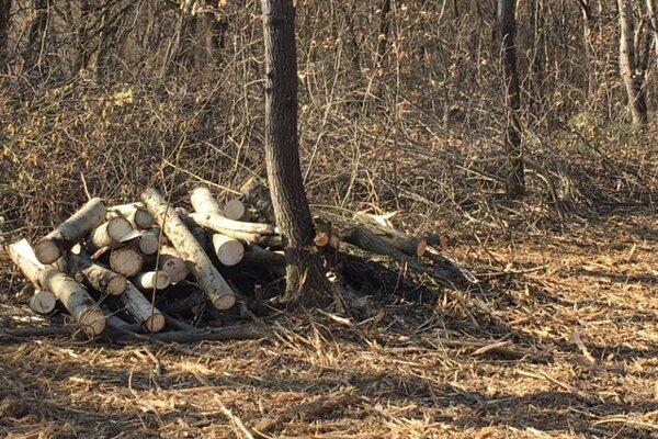 Výrub na súkromnom pozemku. Neďaleko sa rúbalo aj v mestských lesoch a za pochybenie potrestali zamestnanca podniku mesta.